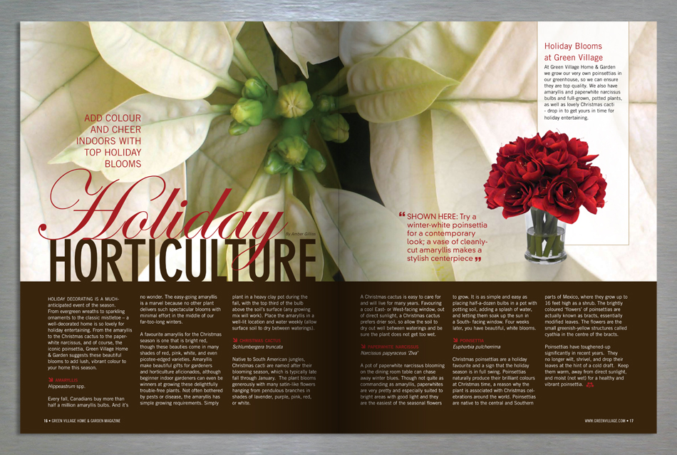 Green Village Home and Garden magazine editorial design for poinsettas